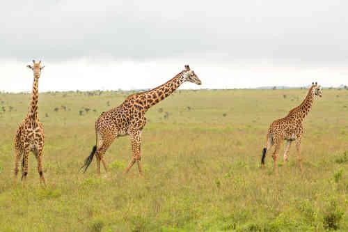 Vuelos a Nairobi