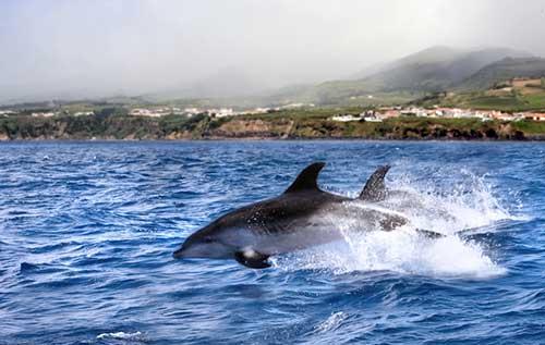 Vuelos a Ponta Delgada